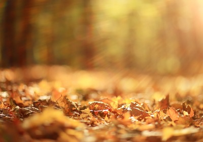 Fall is Here. 10 Tips for Making your Landscape Fit the Season