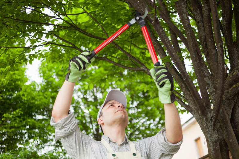 Tree Care, 5 Ways