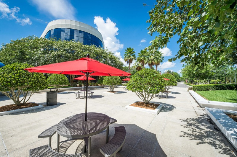 Choosing the Best Trees for Your Commercial Landscape