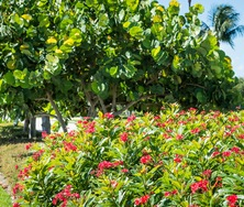 Commercial Landscaping Works for Businesses of Any Size